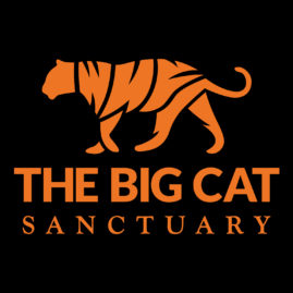 Animal Charity of the Year Finalist – Big Cat Sanctuary